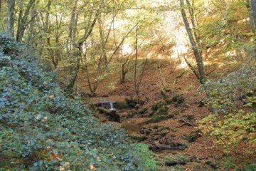 Herbstlicher Wald. Wanderung bei Trier in der Eifel. Bäche, Wasserfälle, Herbstwald und sagenumwobene Höhlen.