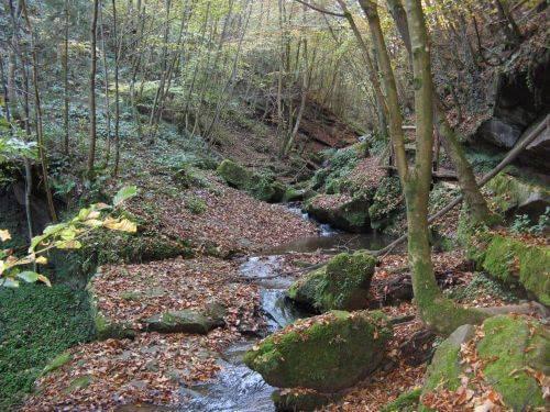 Ein Bach im Wald. Wanderung bei Trier in der Eifel. Bäche, Wasserfälle, Herbstwald und sagenumwobene Höhlen.
