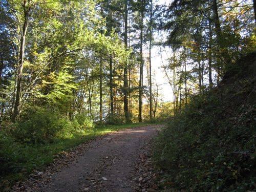 Waldweg. Wanderung bei Trier in der Eifel. Bäche, Wasserfälle, Herbstwald und sagenumwobene Höhlen.