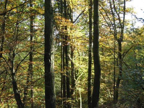 Sonnenspiel zwischen den Bäumen. Wanderung bei Trier in der Eifel. Bäche, Wasserfälle, Herbstwald und sagenumwobene Höhlen.