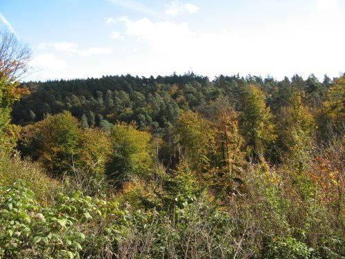 Wald von oben. Wanderung bei Trier in der Eifel. Bäche, Wasserfälle, Herbstwald und sagenumwobene Höhlen.