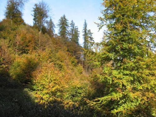 Sonniger Wald. Wanderung bei Trier in der Eifel. Bäche, Wasserfälle, Herbstwald und sagenumwobene Höhlen.