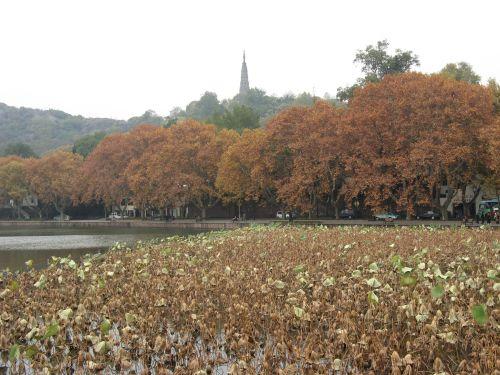 Herbst am Westsee in Hangzhou 杭州 und der Westsee 西湖, China 中国