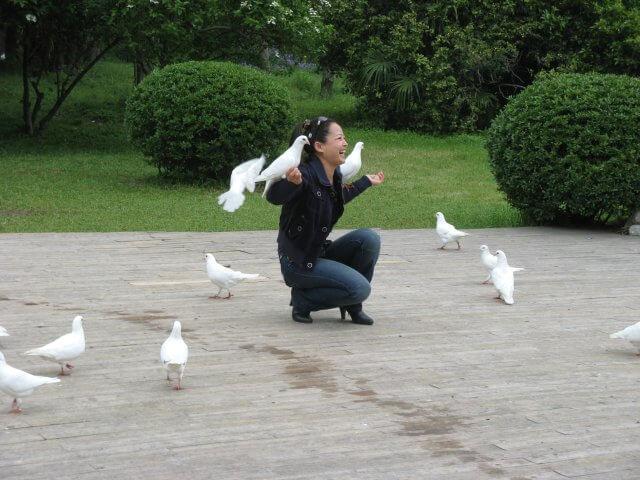 Weiße Tauben. Dienstreise nach Yangzhou 扬州市, Slender West Lake 瘦西湖), China.