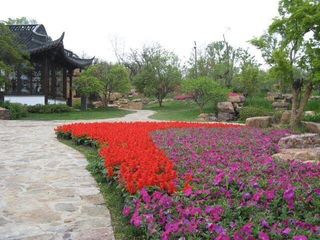 Rote und violette Blumen blühen. Dienstreise nach Yangzhou 扬州市, Slender West Lake 瘦西湖), China.