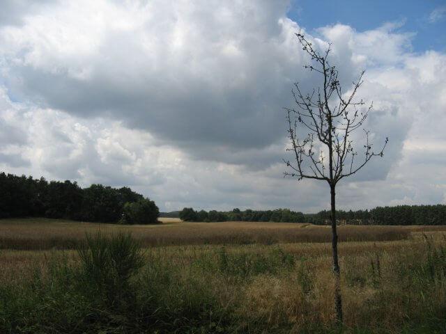Felder, Wiesen und Wälder. Der Fläming-Skate in der Umgebung von Jüterbog.