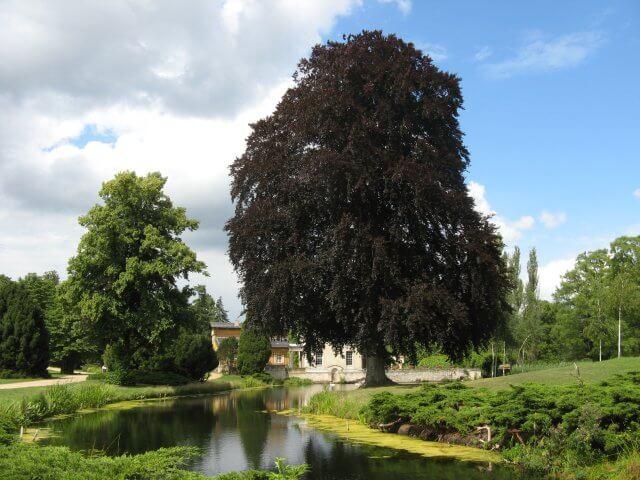 Alte Bäume. Eindrücke aus Potsdam, Sanssouci und neues Palais.