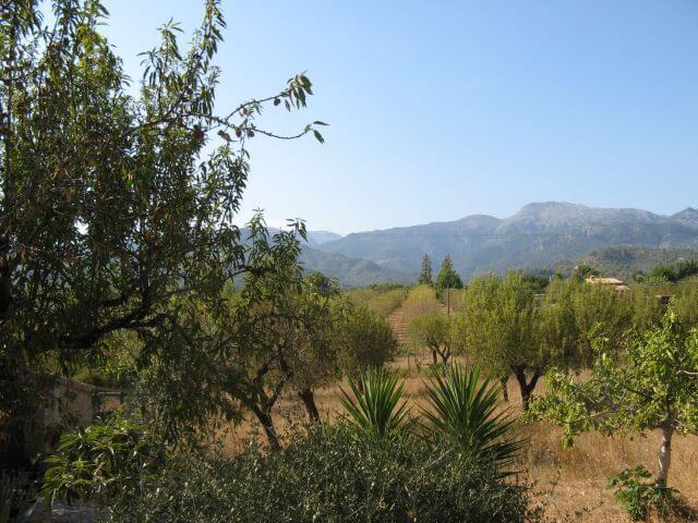 Die Plantage unserer Finca. Wanderungen in der Bergwelt Mallorcas.