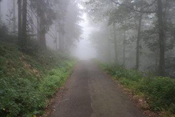 Mystischer Waldweg. Wandertour durch die Eifel, von Kronenburg über den Dreimühlen-Wasserfall zur Hohen Acht.