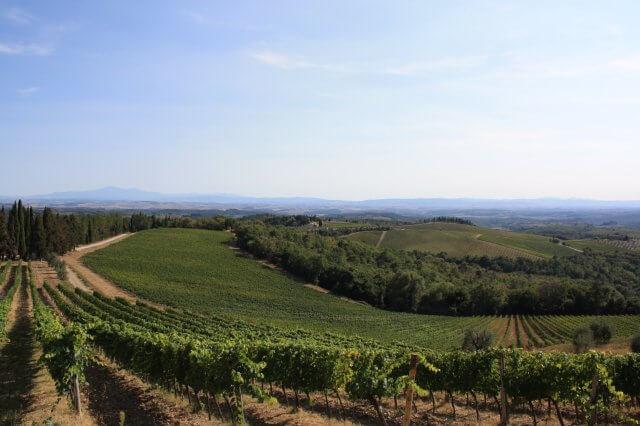 Weinberge. Toskana-Landschaft, Italien