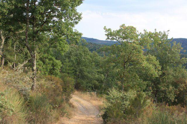 Waldweg. Toskana-Landschaft, Italien