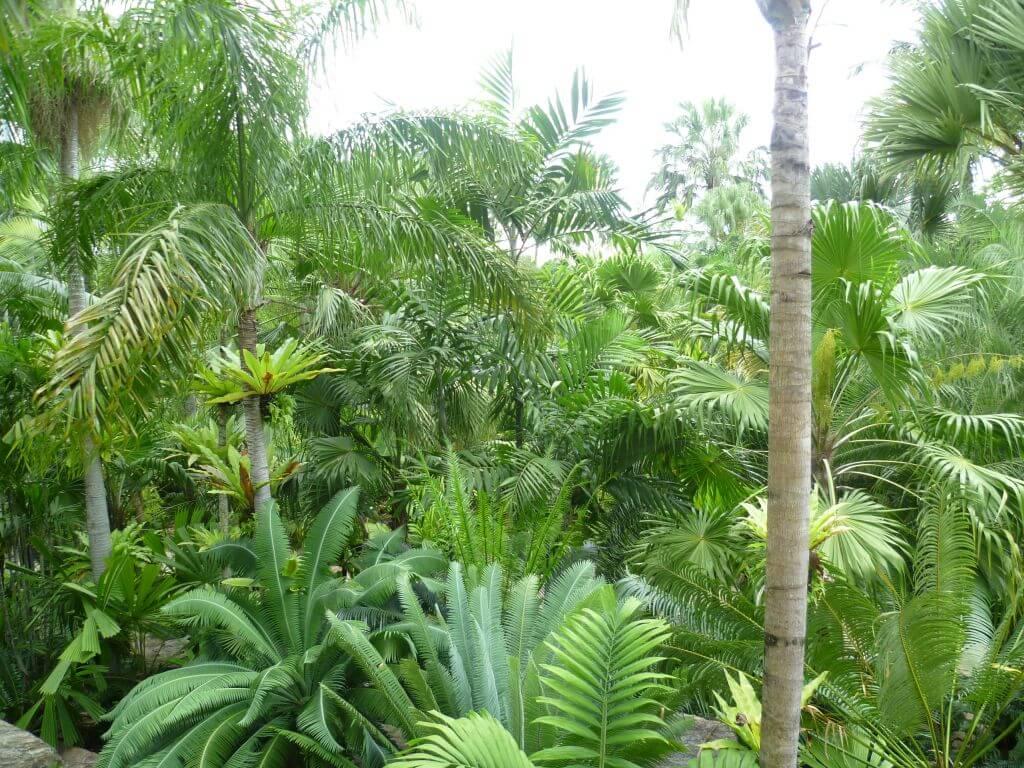 Tropischer Urwald im Nong Nooch - tropical botanical garden, Thailand.