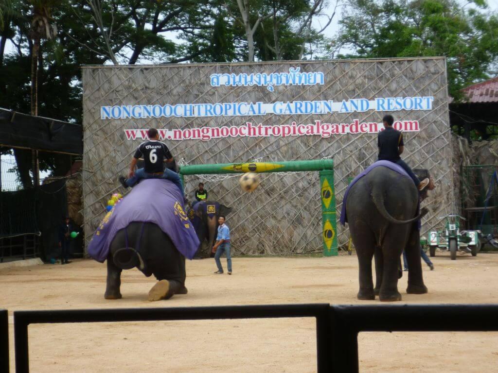 Elefanten spielen Fußball im Nong Nooch - tropical botanical garden, Thailand.