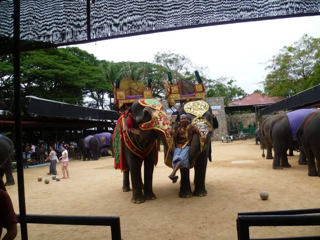 Elefanten im Nong Nooch - tropical botanical garden, Thailand.