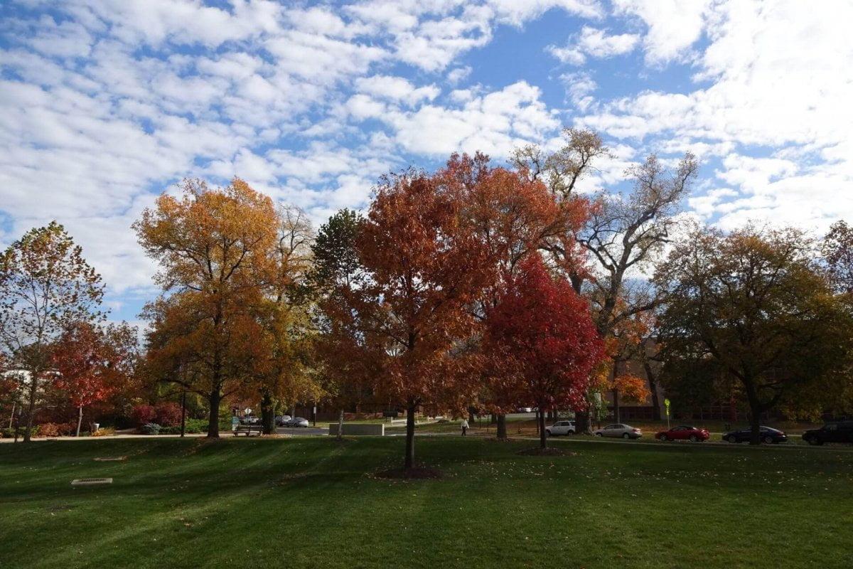 Herbstliche Bäume am Cleveland Art Museum. Bilder und Eindrücke aus Cleveland, Ohio, United States.