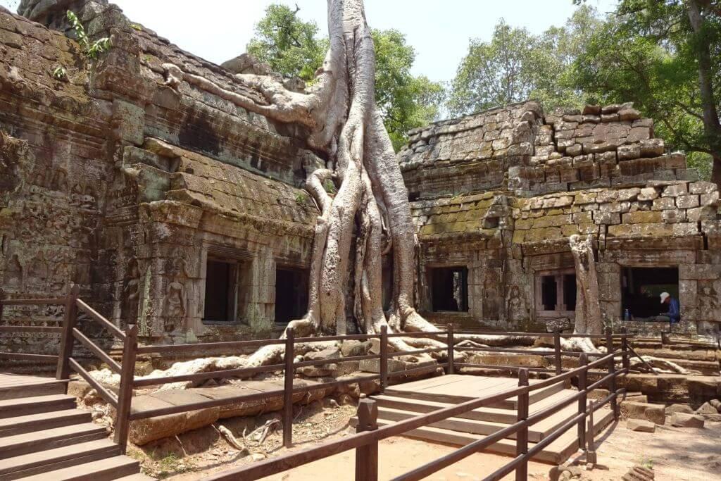 Würgefeige im Ta Prohm, der Tomb Raider Tempel. Bilder und Eindrücke aus Kambodscha - Cambodia, Siem Reap, Angkor Wat, Sihanoukville und Phnom Penh.