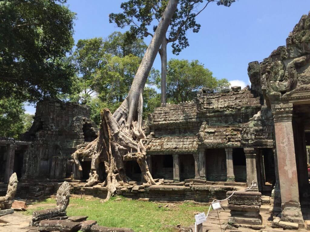 Preah Khan Baum im Tempel. Bilder und Eindrücke aus Kambodscha - Cambodia, Siem Reap, Angkor Wat, Sihanoukville und Phnom Penh.