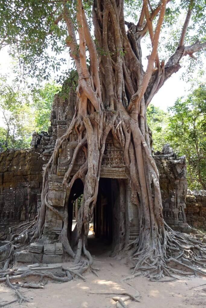 Ta Som bewachsenes Eingangstor. Bilder und Eindrücke aus Kambodscha - Cambodia, Siem Reap, Angkor Wat, Sihanoukville und Phnom Penh.